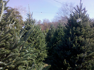 Twin Bridges Nursery Christmas Tree Lot